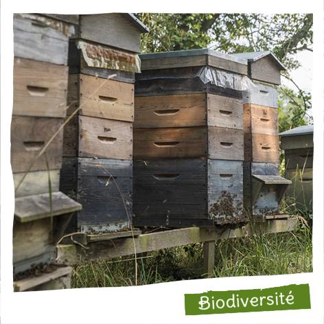 120 ruches installées chez nos producteurs Bio dans un territoire préservé.