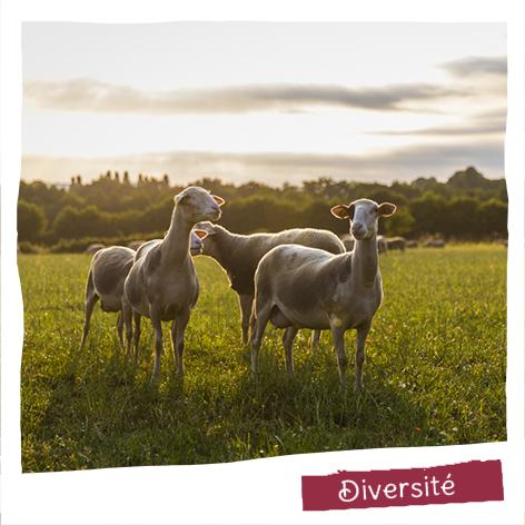 Nous travaillons 3 laits animaux et de multiples bases végétales pour offrir plaisir et santé à tous en allant vers uniquement des ingrédients naturels même sur nos gammes conventionnelles.
