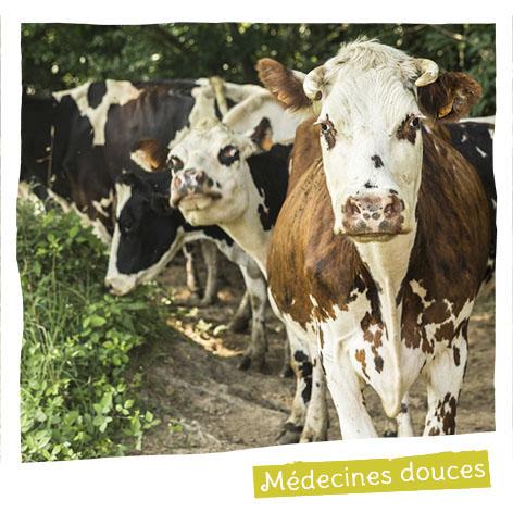 Nous encourageons l'utilisation de médecines douces dont les huiles essentielles pour soigner les animaux.