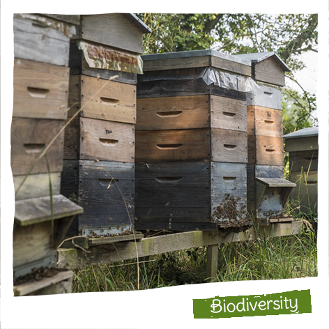 120 hives installed on our Organic producers' sites in a conservation area.