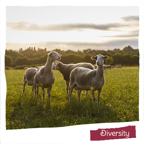We work with 3 animal milks and many plant bases to ensure that health and pleasure are within everyone's reach by using natural ingredients only, even in our more conventional ranges.