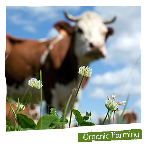 45% of the products we sell are produced using organic farming techniques.